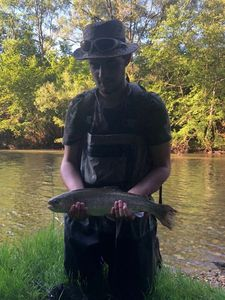 Rainbow Trout — Faustin Lafage