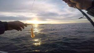 European Squid — Julien PAYRAT