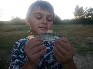 European Perch — Momo fishing