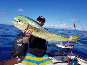 Dolphinfish — Paul Bhm team no-killeurre carna