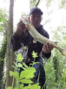 Northern Pike — Esox Lucius