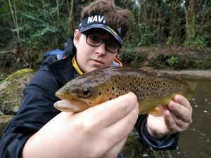 Brown Trout — Donatien Fishing