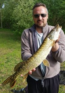 Northern Pike — Romain Corbeaux