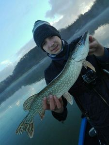 Northern Pike — Gontran Labeyrie