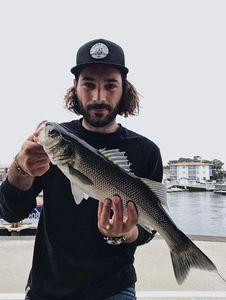 European Bass (Seabass) — Jullient Dufffaux