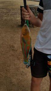 Bumphead Parrotfish — evan ablancourt