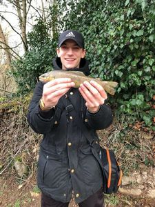 Brown Trout — Raphael Rlt