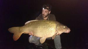 Common Carp — Jay Massaï