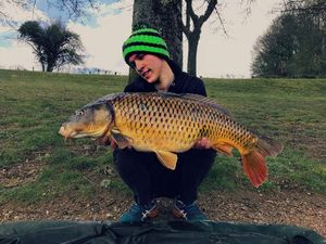 Common Carp — Julien Morelet