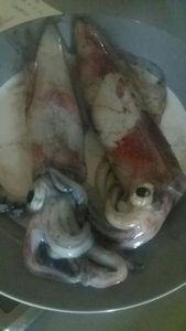 European Squid — Mohamed Lahmar