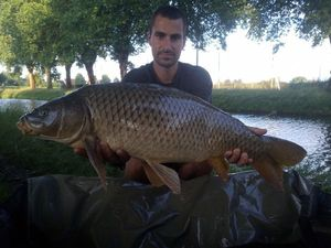 Common Carp — Mickael  Fischer