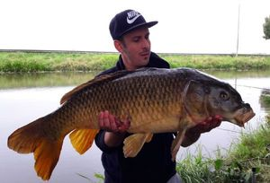 Common Carp — Mark Van Giessel