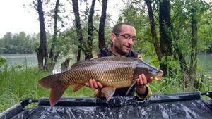 Common Carp — Julien Blaque