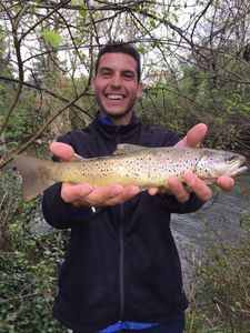 Brown Trout — Julien Cordonnery Crevette