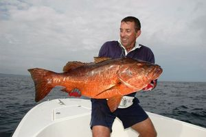 Pacific Cubera Snapper