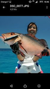 African Red Snapper — Bruno  Cot
