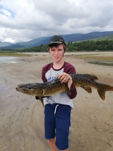 Northern Pike — Alex Mo