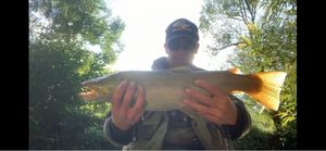 Brown Trout — Mickael Petit