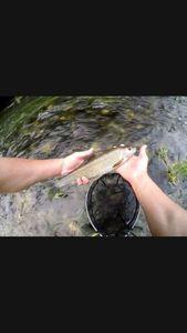 Grayling — Fishing Vortex