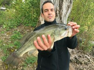 Largemouth Bass — Guillaume Fishbreizh