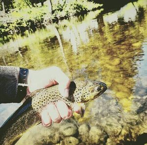 Brown Trout — Gatien Mismaque