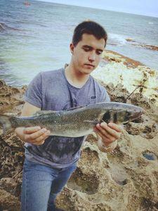 European Bass (Seabass) — Victor Boissiere