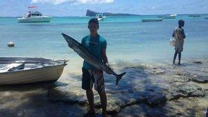 Great Barracuda — Valentin Bdl