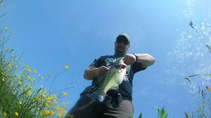 Largemouth Bass — David Carrera
