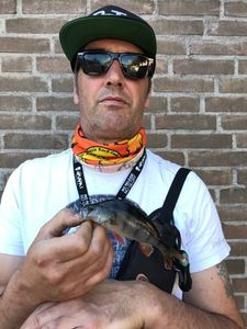 European Perch — Edwin Dons
