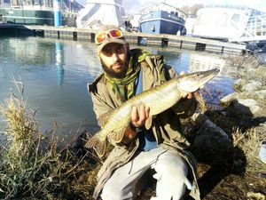 Northern Pike — Ted Fisherman Friend 26