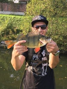 European Perch — Timothy Ducrot