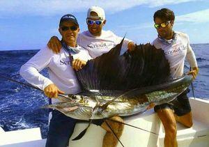 Pacific Sailfish — GUILLAUME Benoit
