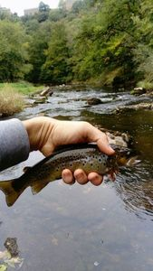 Brown Trout — Guillaume Garcia