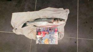 European Bass (Seabass) — Christophe Delalandes