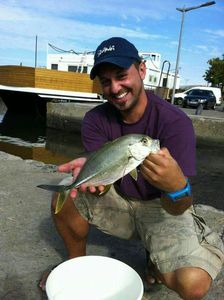 Blue Spotted Trevally — GIORGIO  ANDRIEU
