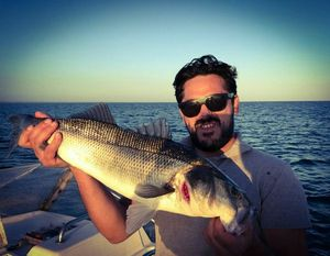 European Bass (Seabass)
