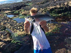 European Bass (Seabass) — Martin Kyndt