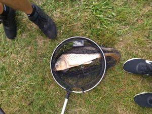 Common Carp — Mael Aarab
