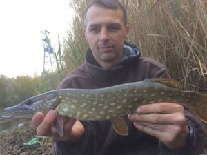 Northern Pike — David Chapuy