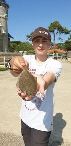 European Plaice — maxou lbs