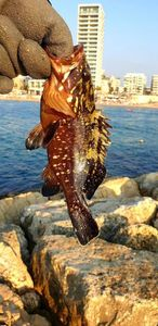 Malabar Grouper — Pierre Cacitti