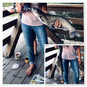 Channel Catfish
