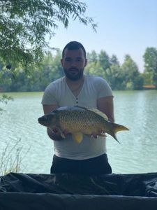 Common Carp — Guillaume Did