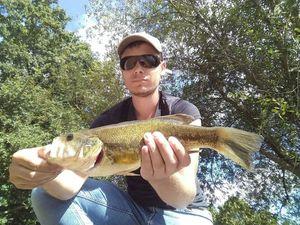 Largemouth Bass — Nicolas Villiers