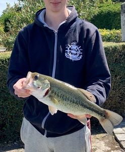 Largemouth Bass — Lucien Franckowiak