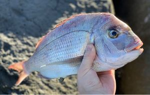 Snapper (Squirefish)
