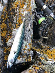 Mackerel — Cedric Legall