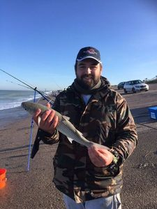 Thicklip Grey Mullet — Kevin Mohier