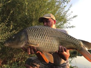 Common Carp — Laurent Bénard