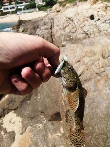 Gobie à Grosse Tête — Adrien Fisherman